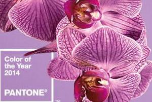 El color del año 2014 según Pantone es Orquídea Radiante